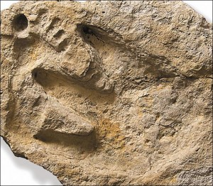 Picture of human and dinosaur footprints together.